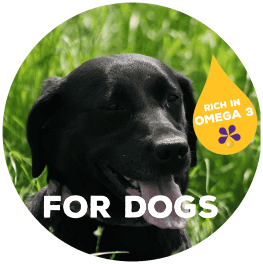 Rich in omega-3 for dogs - PureFlax natural flax seed oil