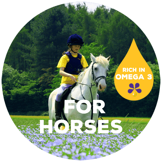 Rich in omega-3 for horses - PureFlax natural flax seed oil