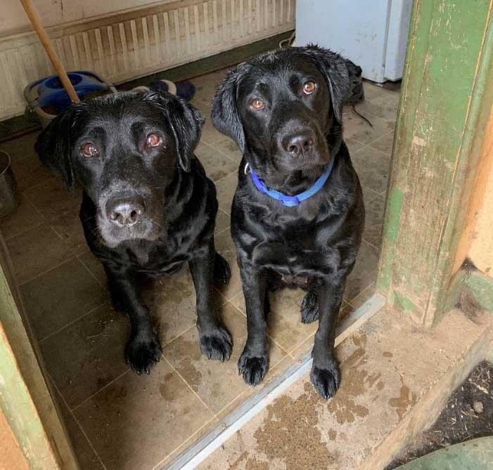 PureFlax dogs Echo & Nessa